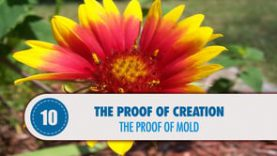 Proof # 10: The Proof of Mold