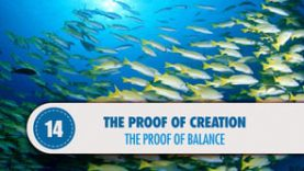 Proof # 14: The Proof of Balance