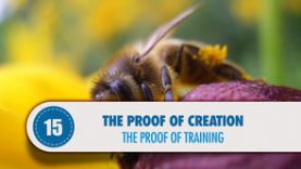 Proof # 15: The Proof of Training
