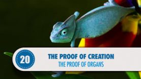 Proof # 20: The Proof of Organs