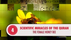 Scientific Miracles of the Quran, 4 – The Female Honey Bee