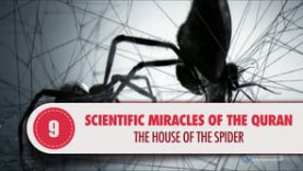 Scientific Miracles of the Quran, 9 – The House of the Spider