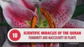 Scientific Miracles of the Quran, 10 – Femininity and Masculinity in Plants